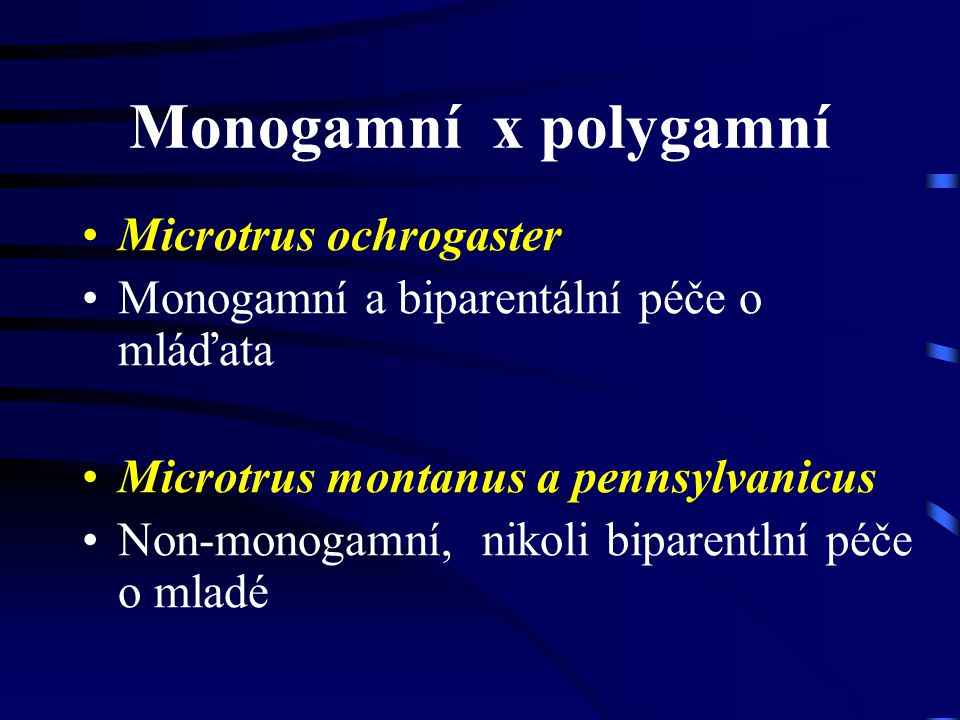 Monogamní x polygamní Microtrus ochrogaster