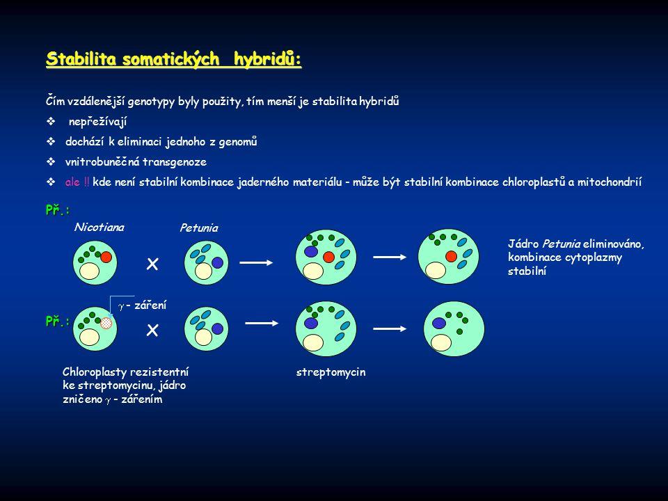 x Stabilita somatických hybridů: Př.: Př.: