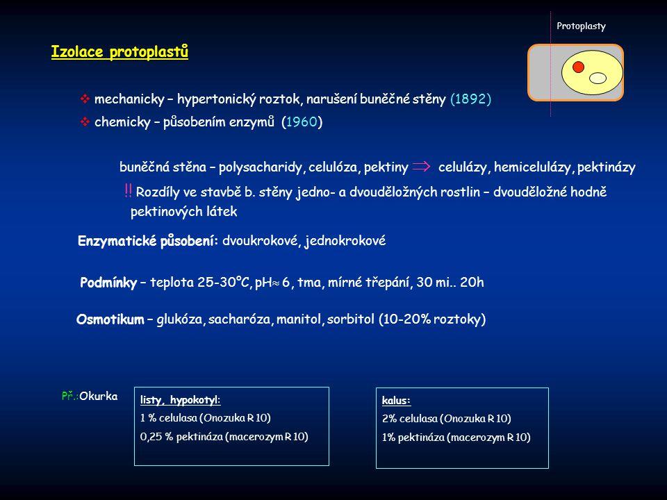 Protoplasty Izolace protoplastů. mechanicky – hypertonický roztok, narušení buněčné stěny (1892) chemicky – působením enzymů (1960)