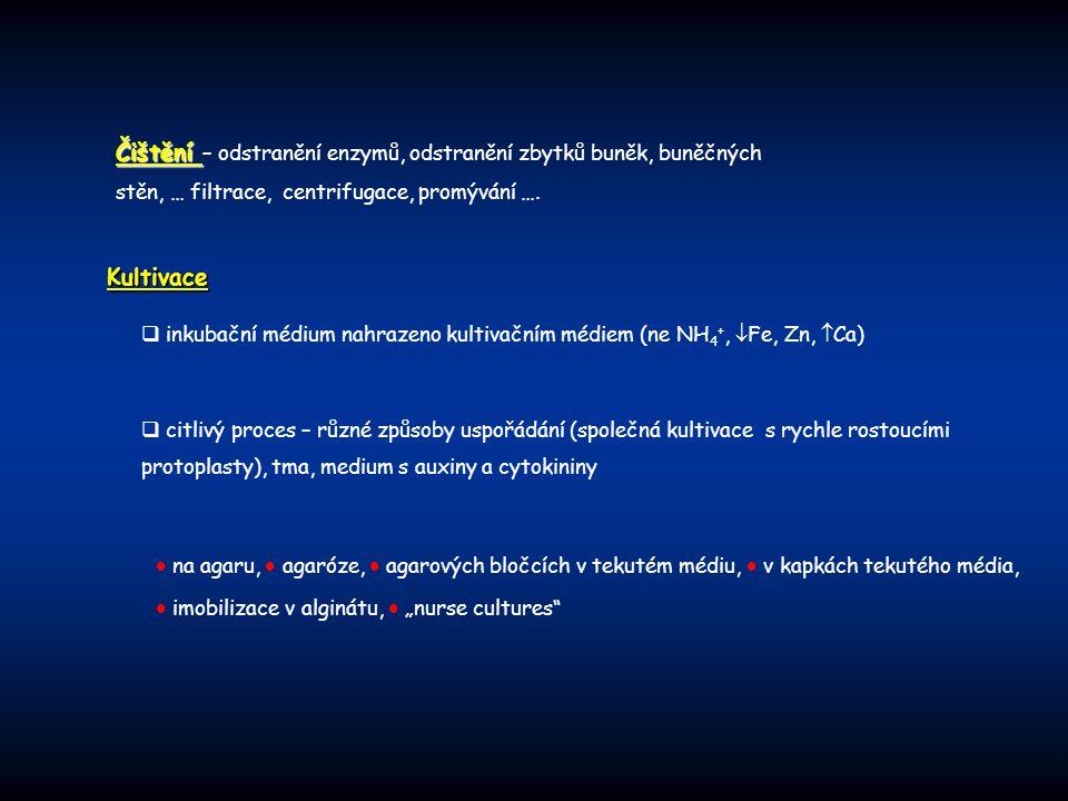 Čištění – odstranění enzymů, odstranění zbytků buněk, buněčných stěn, … filtrace, centrifugace, promývání ….