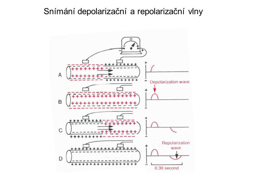 Snímání depolarizační a repolarizační vlny