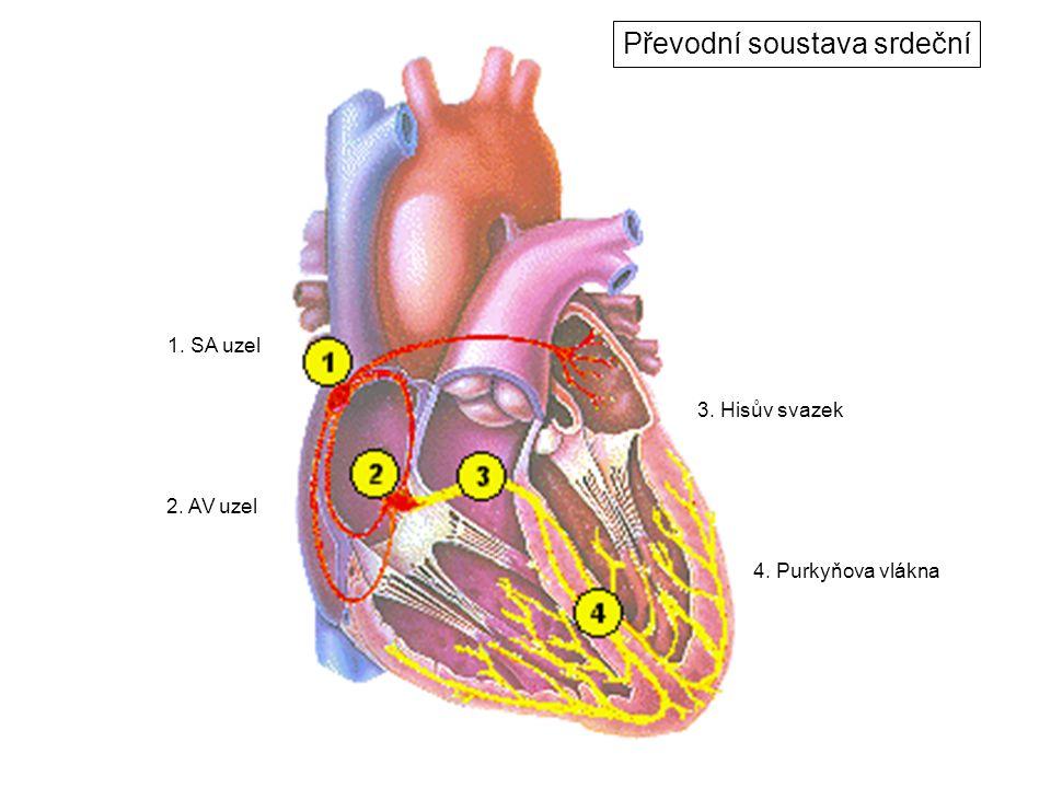 Převodní soustava srdeční