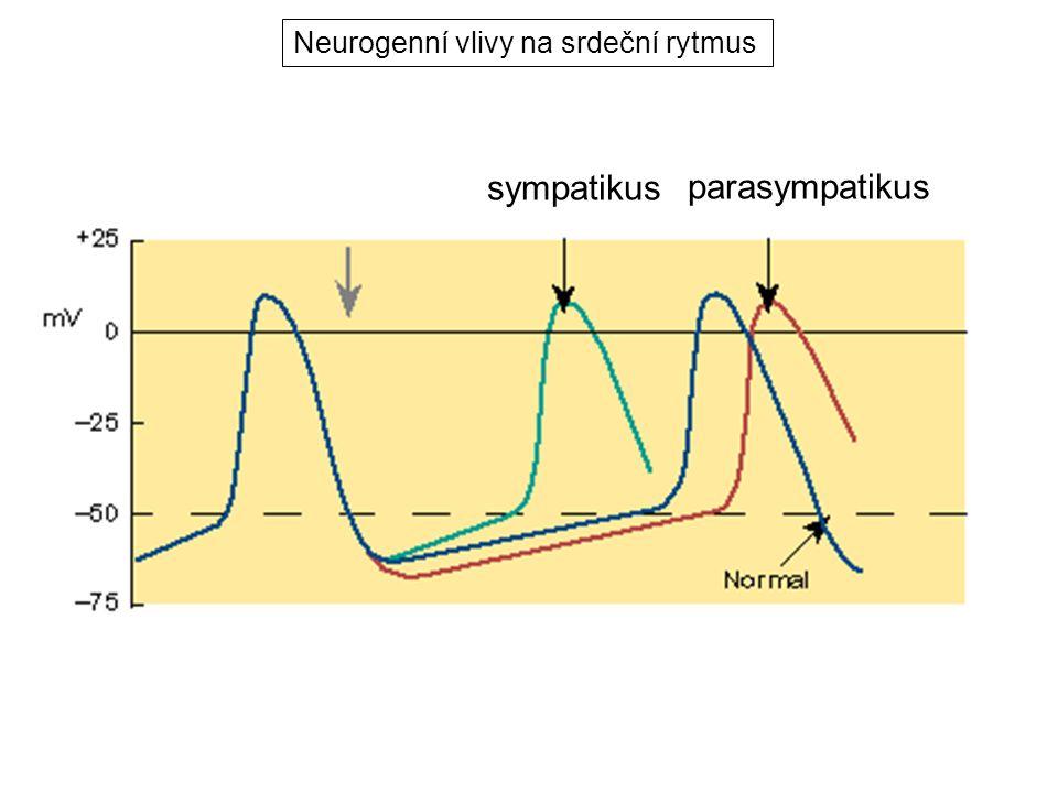 Neurogenní vlivy na srdeční rytmus
