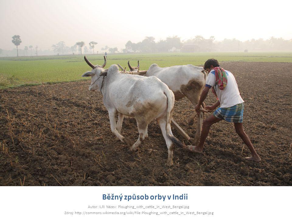 Běžný způsob orby v Indii