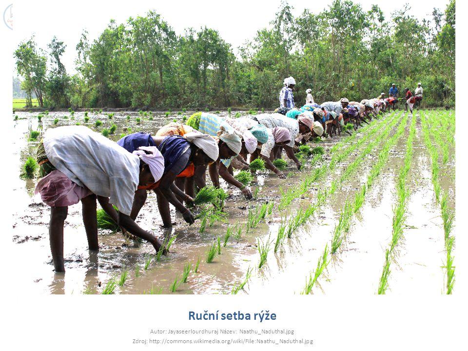 Ruční setba rýže Autor: Jayaseerlourdhuraj Název: Naathu_Naduthal.jpg