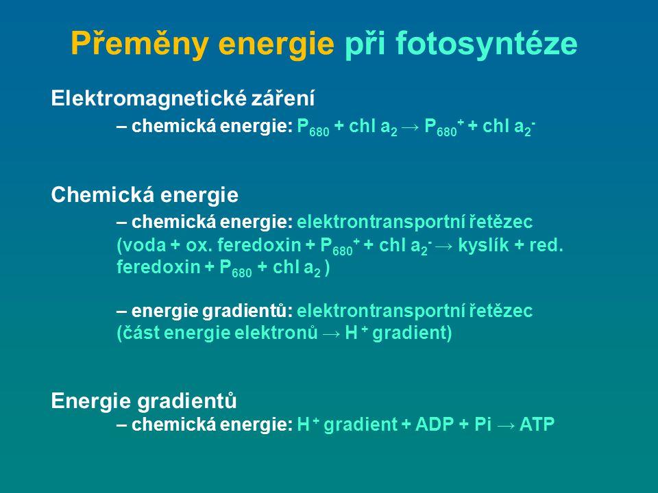 Přeměny energie při fotosyntéze