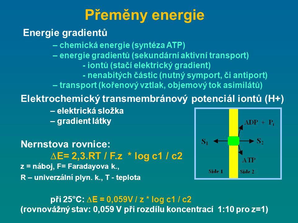 Přeměny energie Energie gradientů – chemická energie (syntéza ATP)