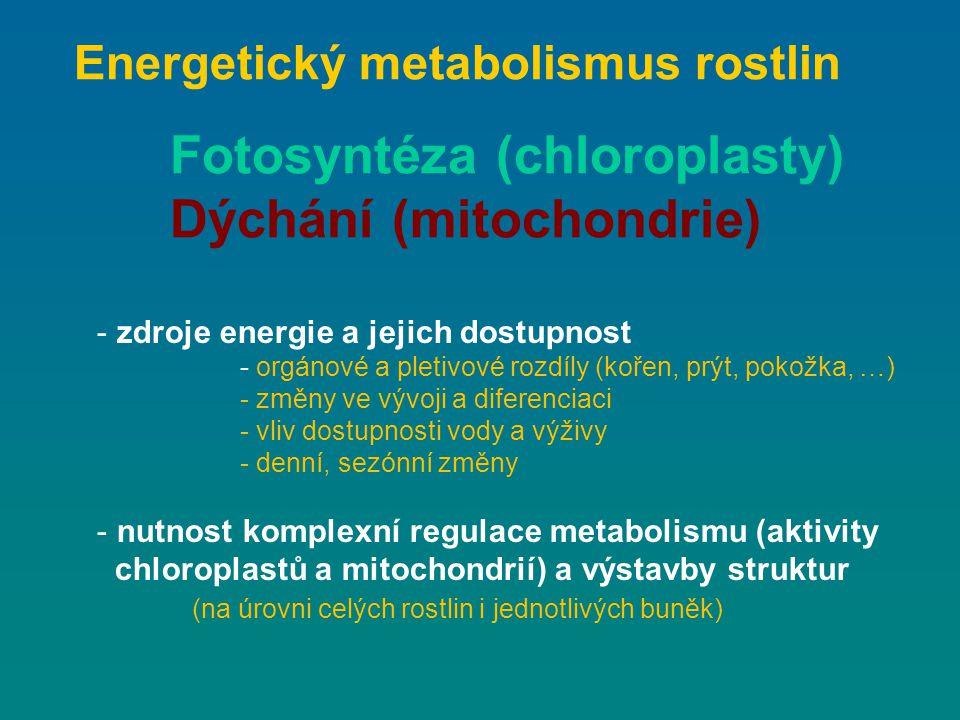 Fotosyntéza (chloroplasty) Dýchání (mitochondrie)
