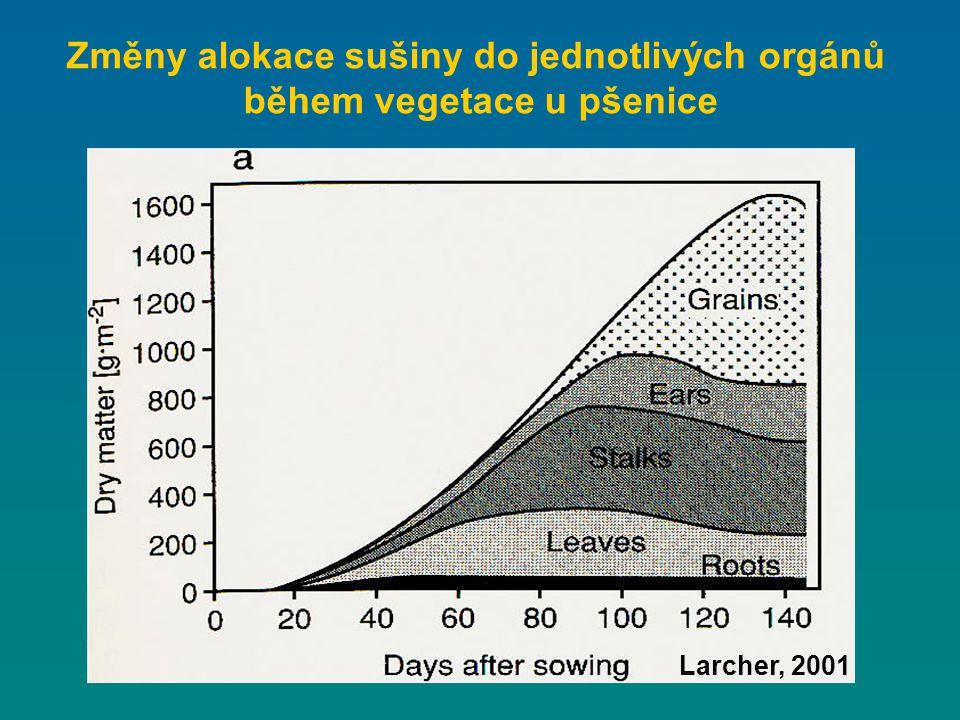 Změny alokace sušiny do jednotlivých orgánů během vegetace u pšenice