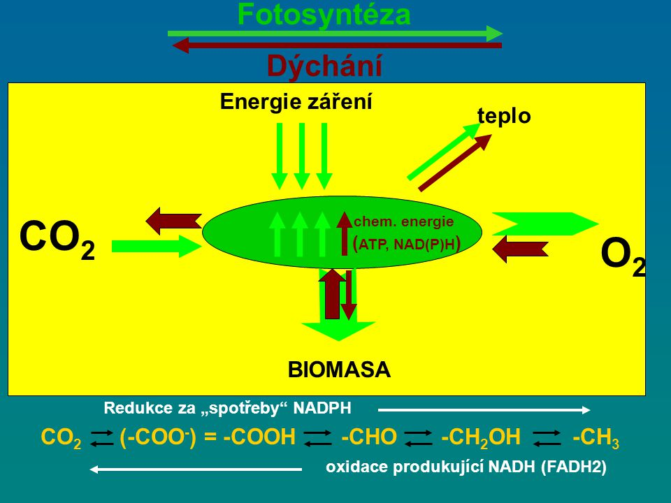 CO2 O2 Fotosyntéza Dýchání Energie záření teplo BIOMASA