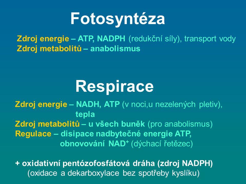 Fotosyntéza Respirace