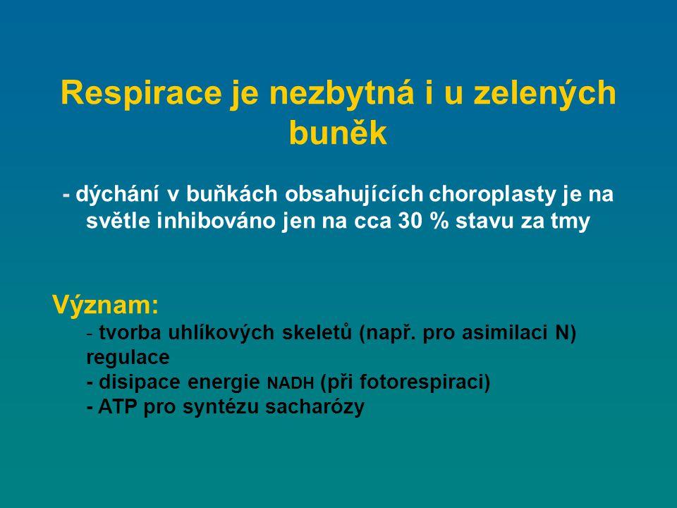 Respirace je nezbytná i u zelených buněk