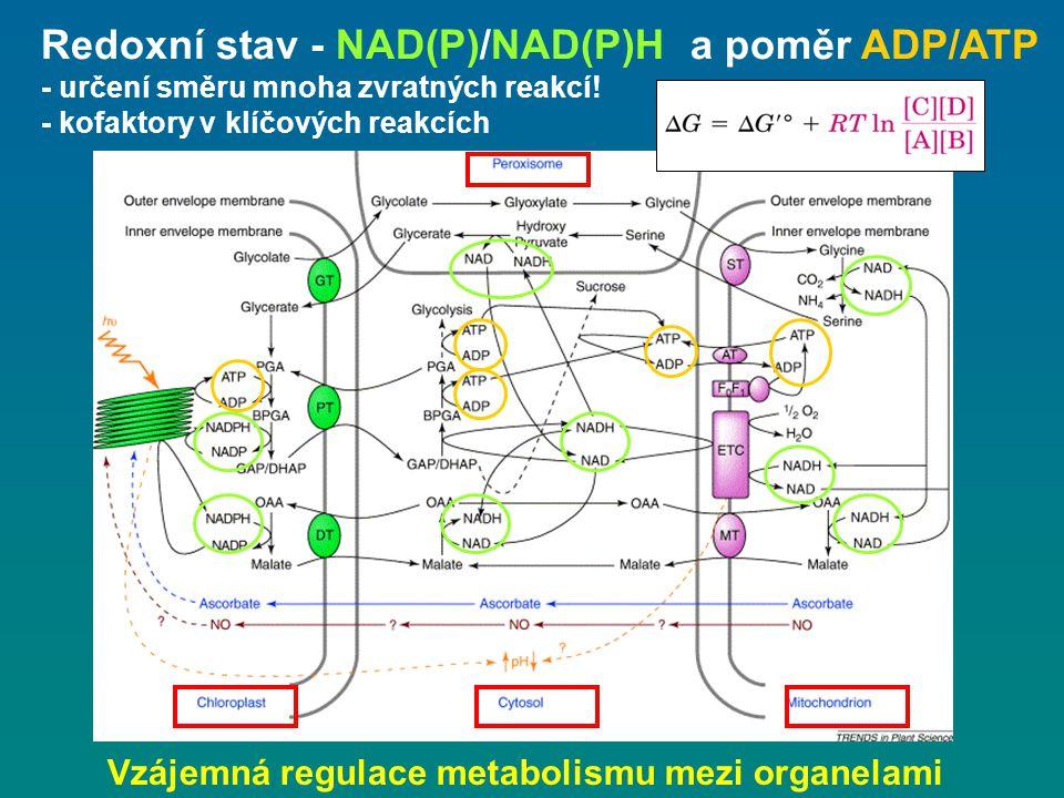 Vzájemná regulace metabolismu mezi organelami