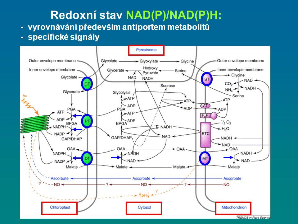 Redoxní stav NAD(P)/NAD(P)H: