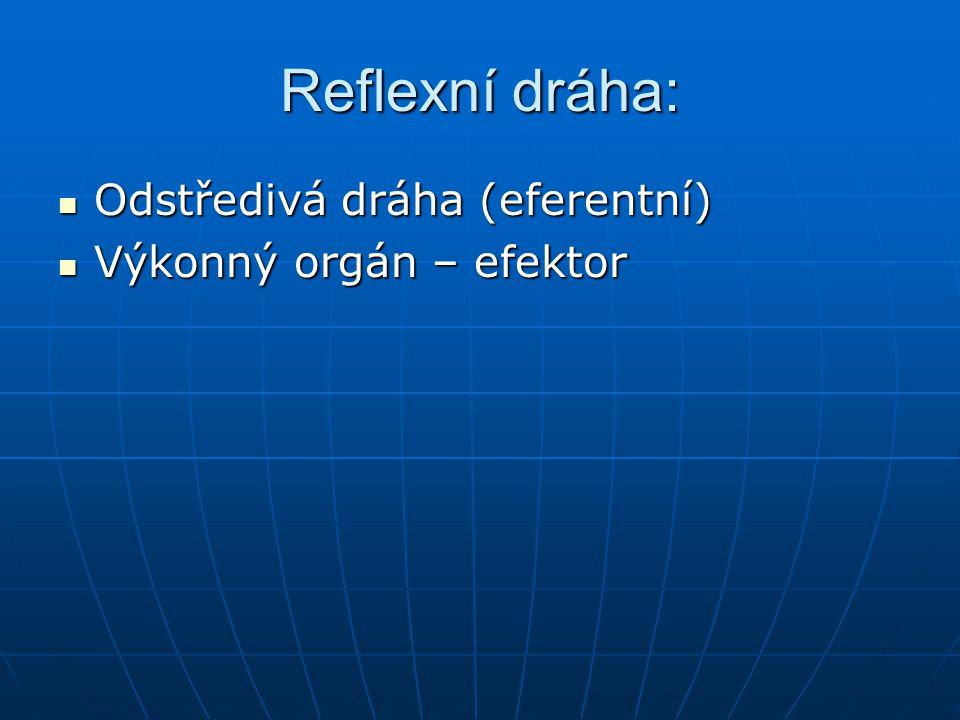 Reflexní dráha: Odstředivá dráha (eferentní) Výkonný orgán – efektor