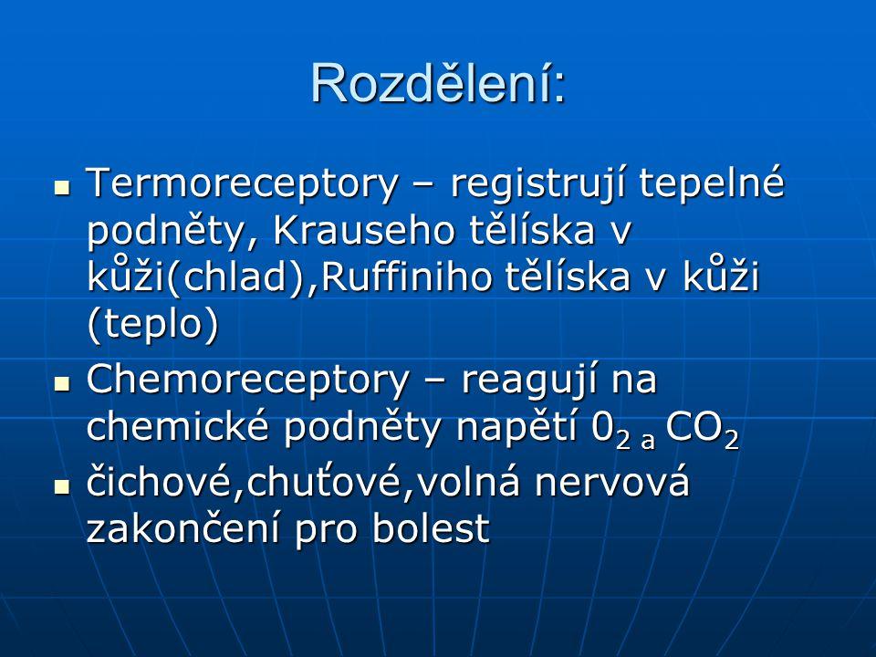 Rozdělení: Termoreceptory – registrují tepelné podněty, Krauseho tělíska v kůži(chlad),Ruffiniho tělíska v kůži (teplo)