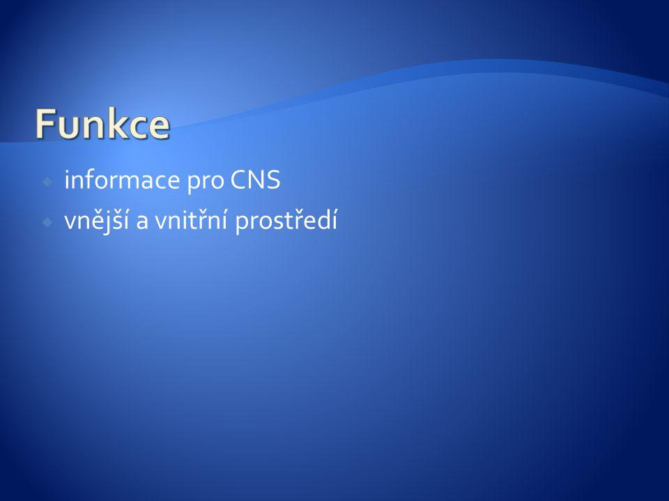 Funkce informace pro CNS vnější a vnitřní prostředí