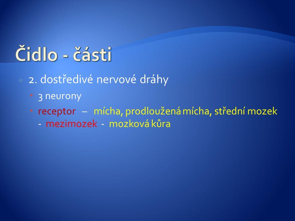 Čidlo - části 2. dostředivé nervové dráhy 3 neurony