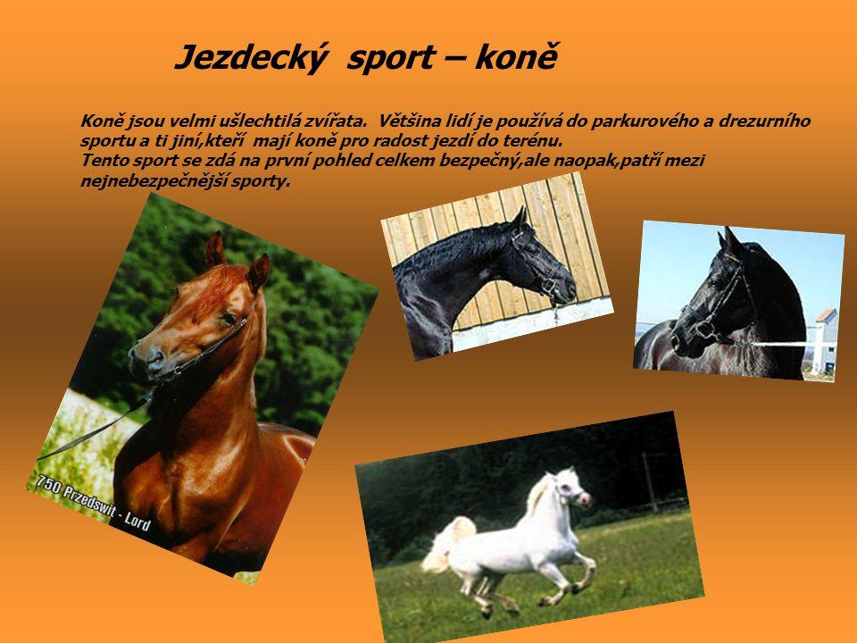Jezdecký sport – koně Koně jsou velmi ušlechtilá zvířata. Většina lidí je používá do parkurového a drezurního.