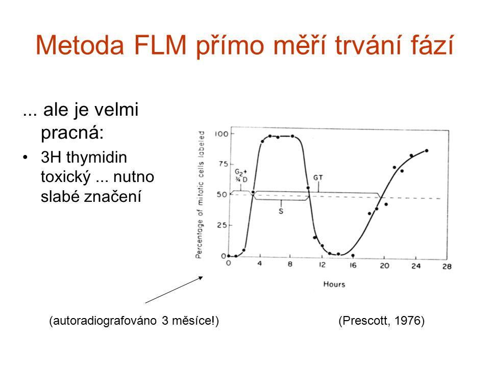 Metoda FLM přímo měří trvání fází