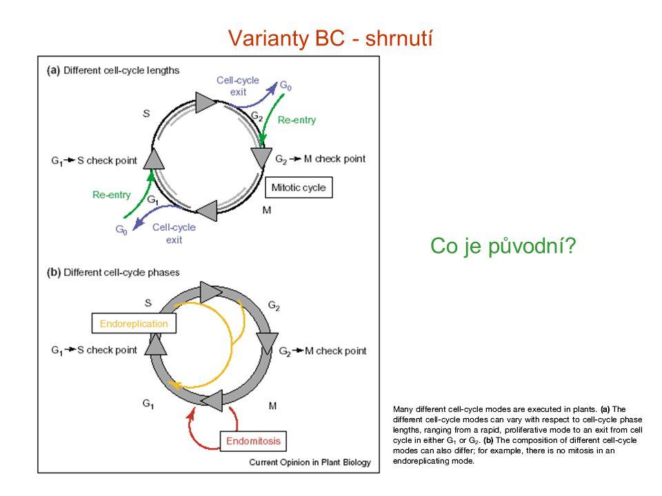 Varianty BC - shrnutí Co je původní