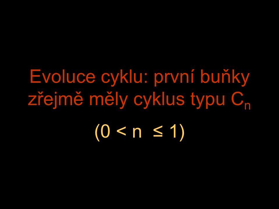 Evoluce cyklu: první buňky zřejmě měly cyklus typu Cn
