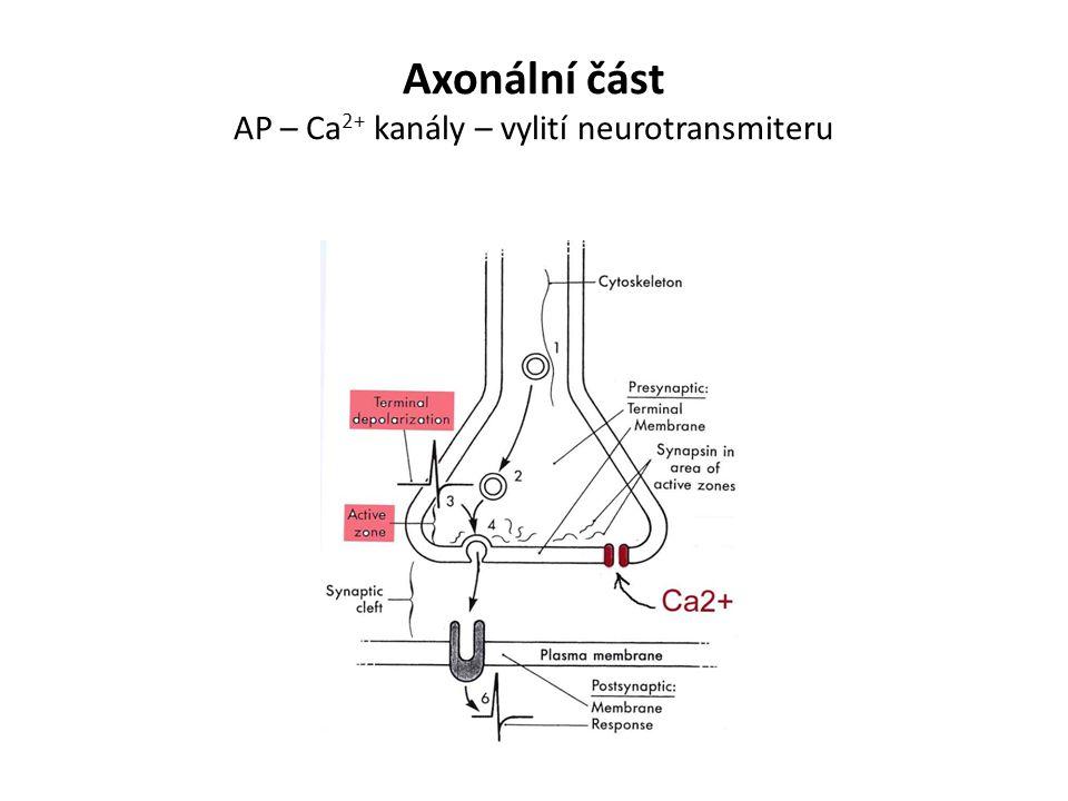 Axonální část AP – Ca2+ kanály – vylití neurotransmiteru