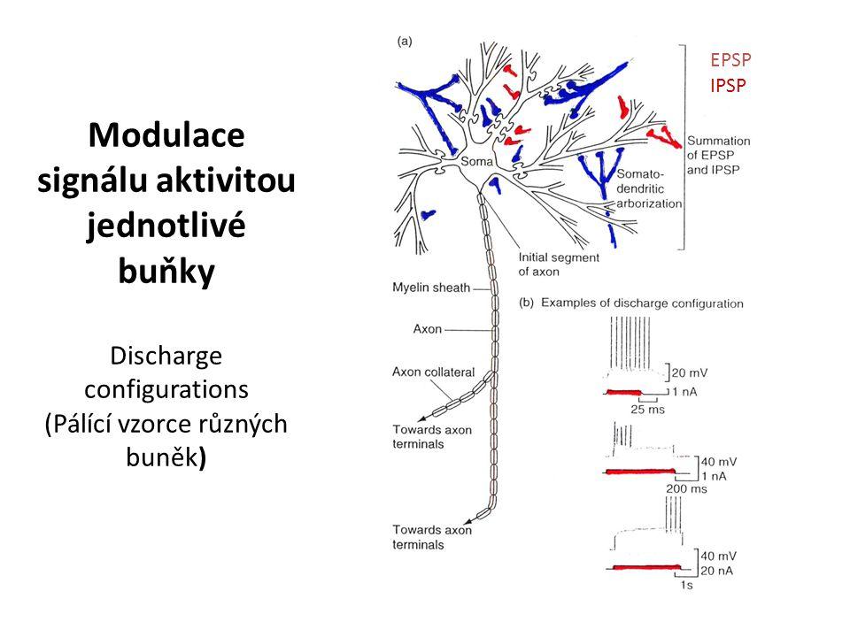 Modulace signálu aktivitou jednotlivé buňky Discharge configurations (Pálící vzorce různých buněk)