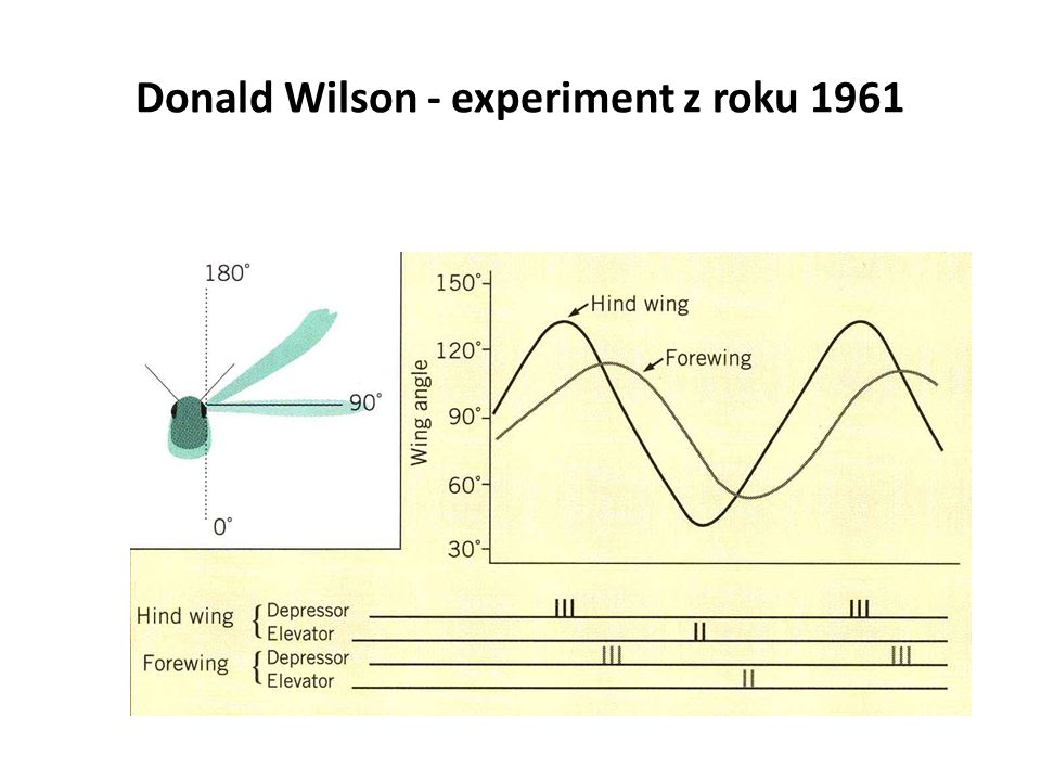 Donald Wilson - experiment z roku 1961