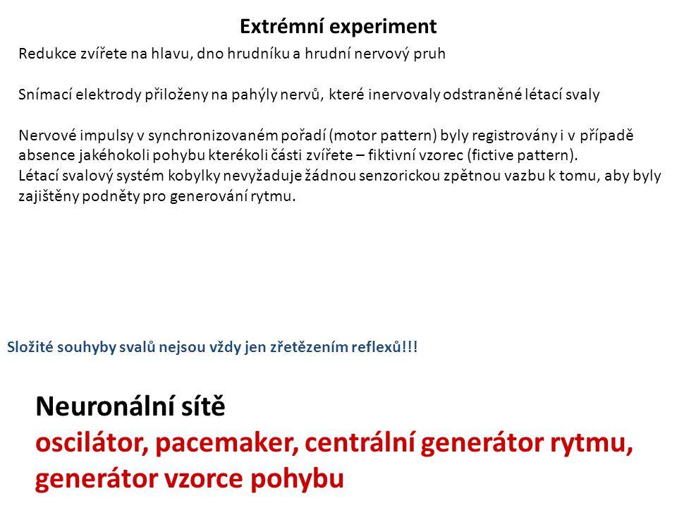 Extrémní experiment Redukce zvířete na hlavu, dno hrudníku a hrudní nervový pruh.