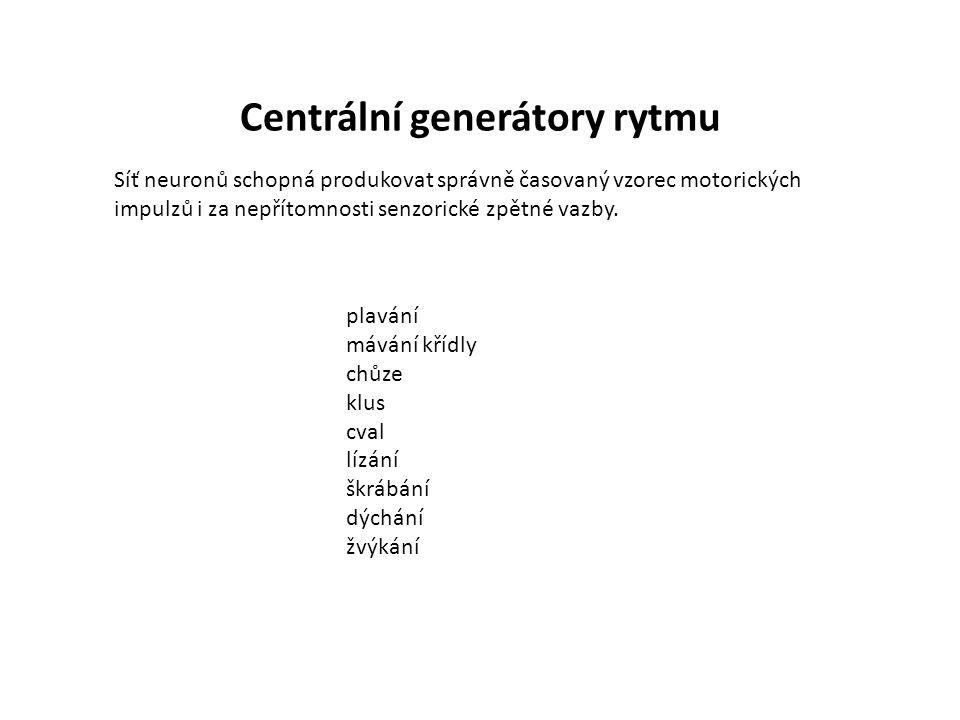 Centrální generátory rytmu