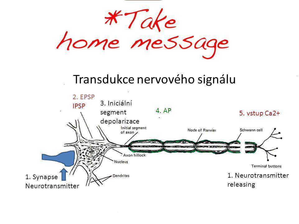 Transdukce nervového signálu