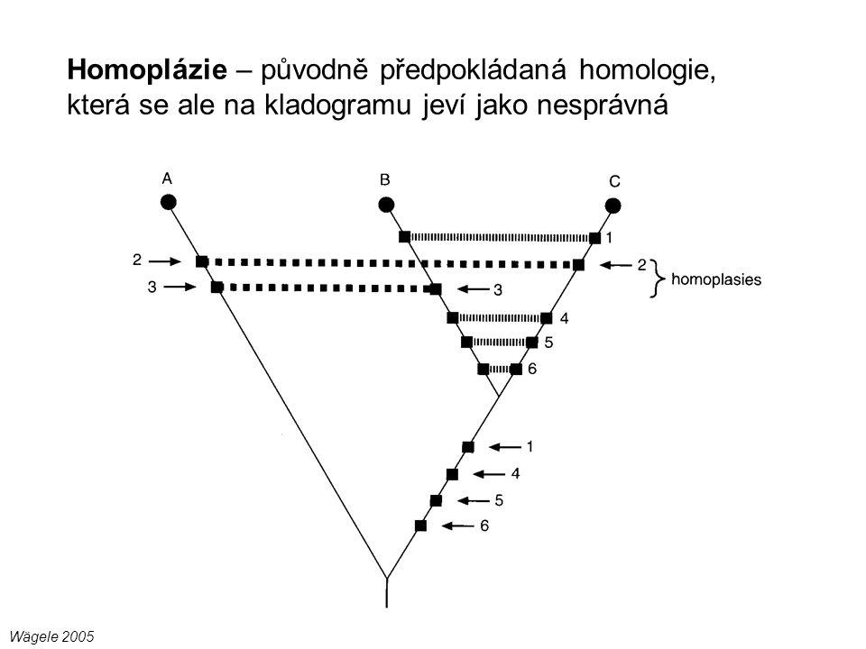 Homoplázie – původně předpokládaná homologie, která se ale na kladogramu jeví jako nesprávná