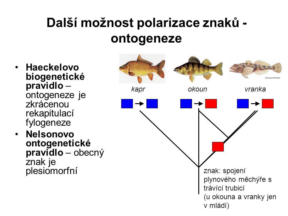 Další možnost polarizace znaků - ontogeneze