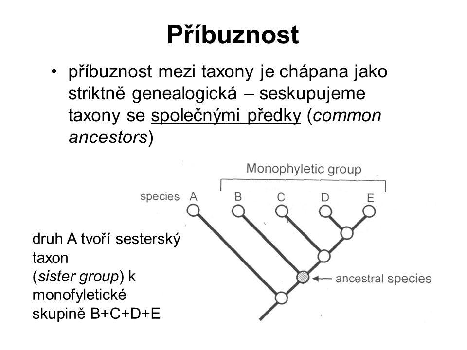 Příbuznost příbuznost mezi taxony je chápana jako striktně genealogická – seskupujeme taxony se společnými předky (common ancestors)