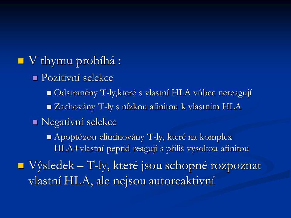 V thymu probíhá : Pozitivní selekce. Odstraněny T-ly,které s vlastní HLA vůbec nereagují. Zachovány T-ly s nízkou afinitou k vlastním HLA.