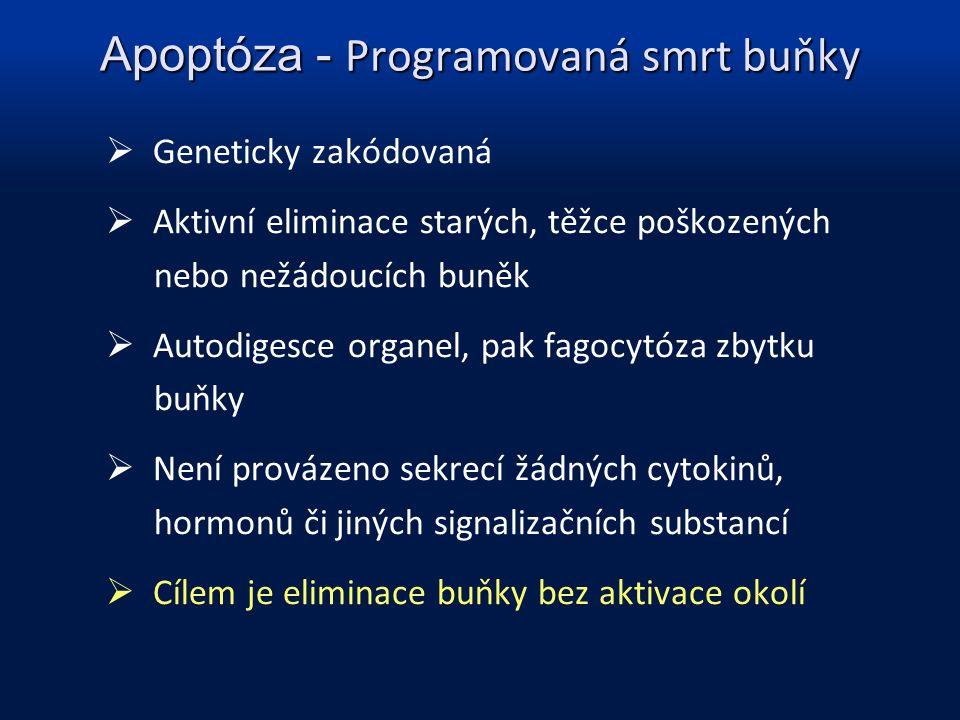 Apoptóza - Programovaná smrt buňky