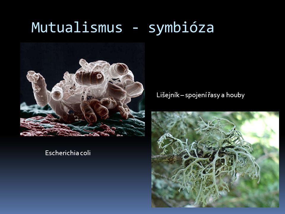 Mutualismus - symbióza