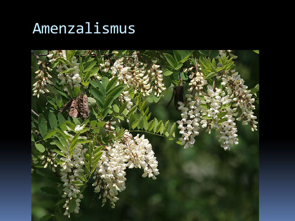Amenzalismus Jeden druh (inhibitor) potlačuje růst druhého druhu (amenzál) a brání jeho přežití, aniž využívá jeho potravu.