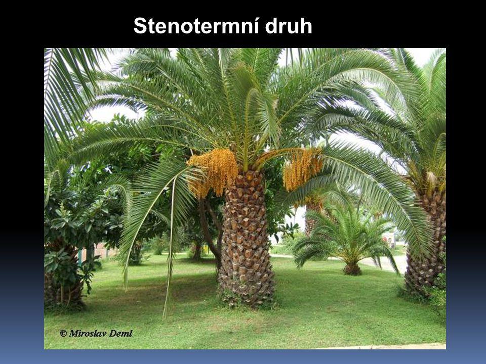Stenotermní druh