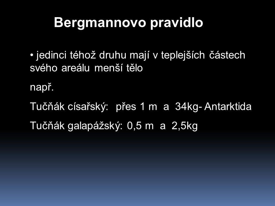 Bergmannovo pravidlo jedinci téhož druhu mají v teplejších částech svého areálu menší tělo. např. Tučňák císařský: přes 1 m a 34kg- Antarktida.