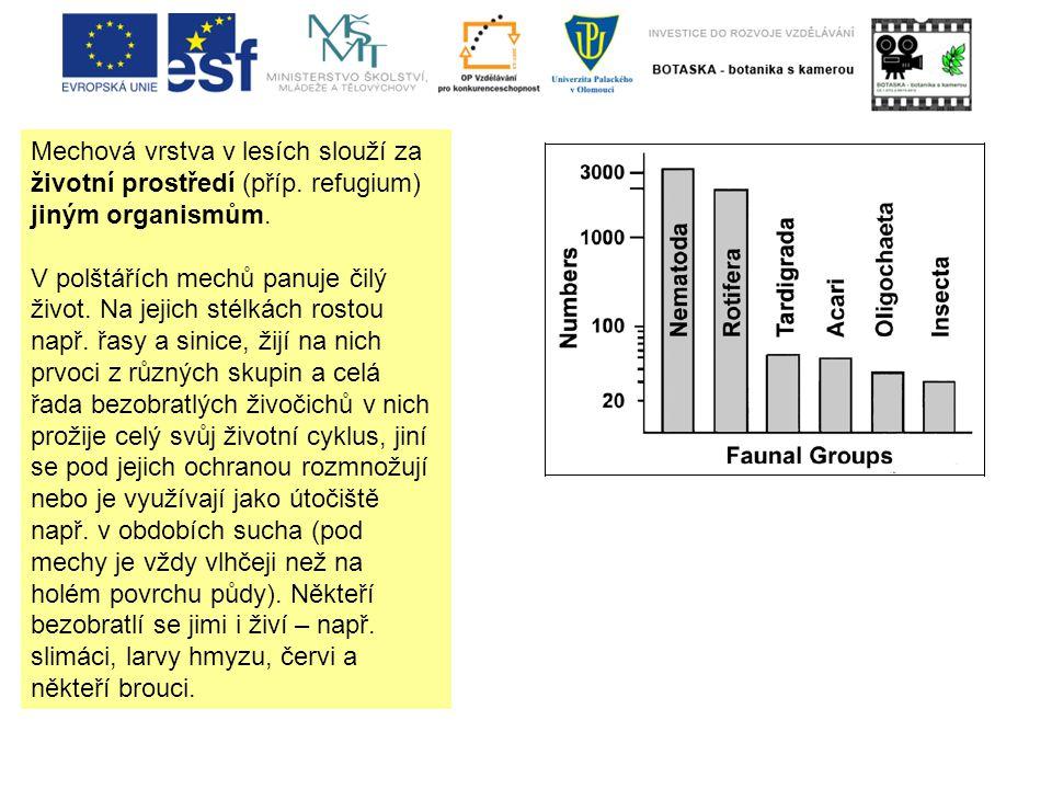 Mechová vrstva v lesích slouží za životní prostředí (příp