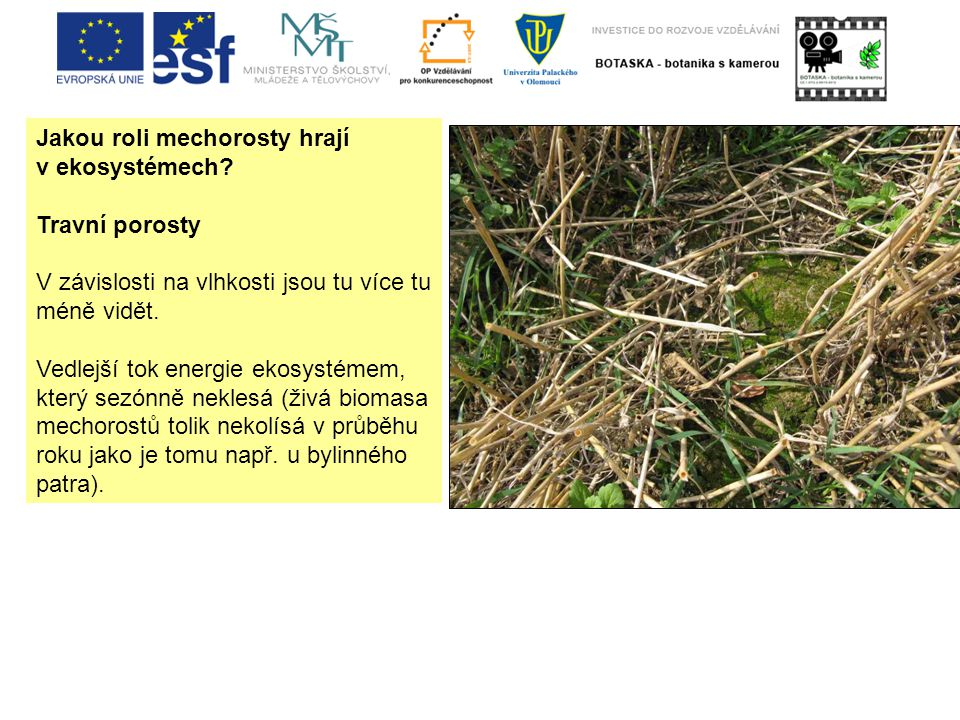 Jakou roli mechorosty hrají v ekosystémech