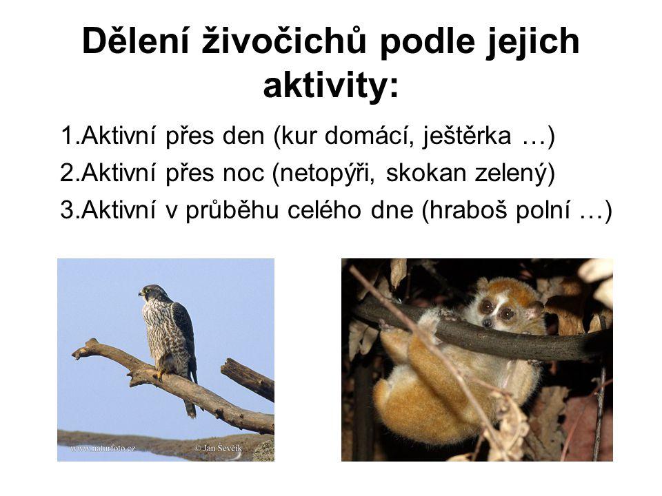 Dělení živočichů podle jejich aktivity: