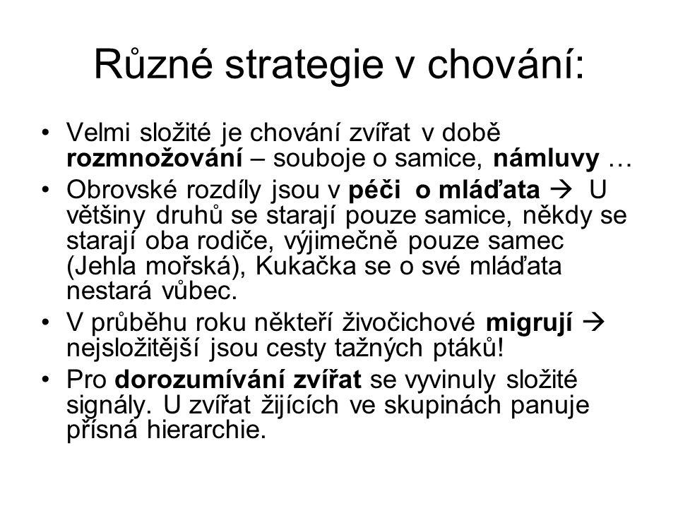 Různé strategie v chování: