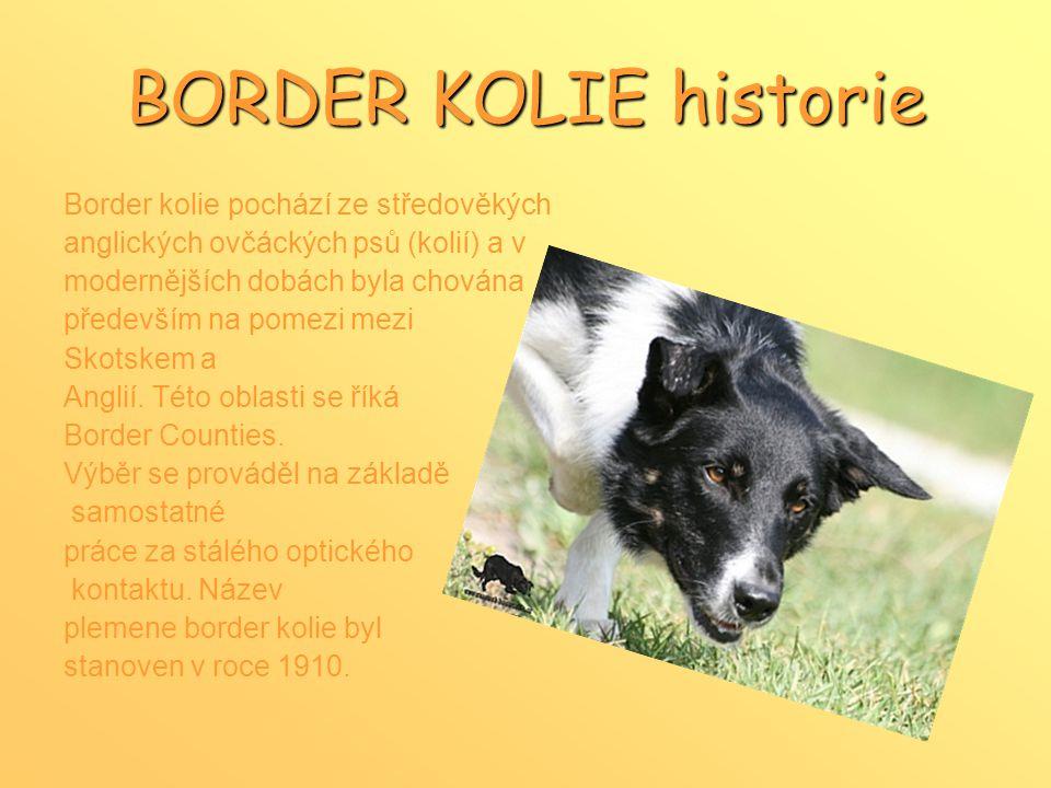 BORDER KOLIE historie Border kolie pochází ze středověkých