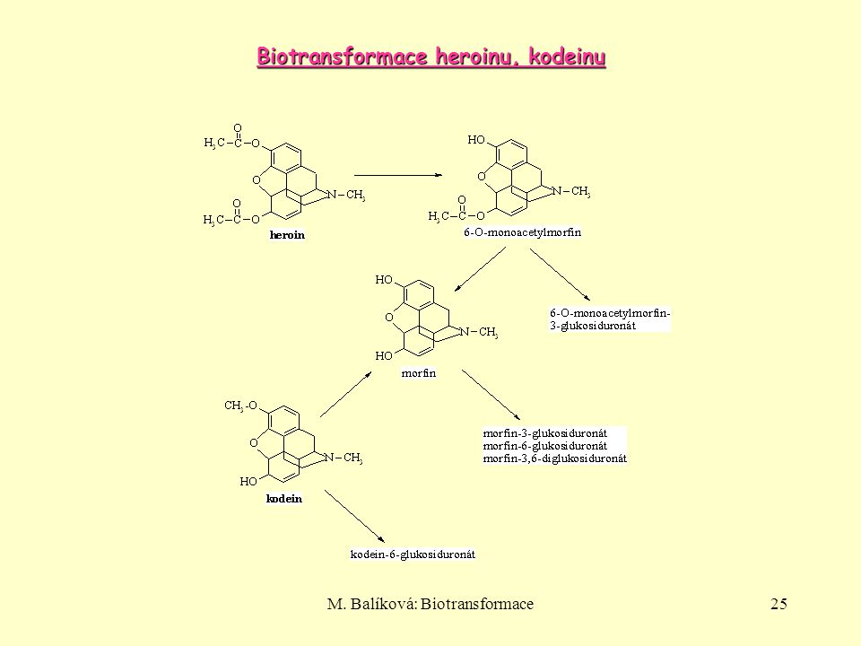 Biotransformace heroinu, kodeinu