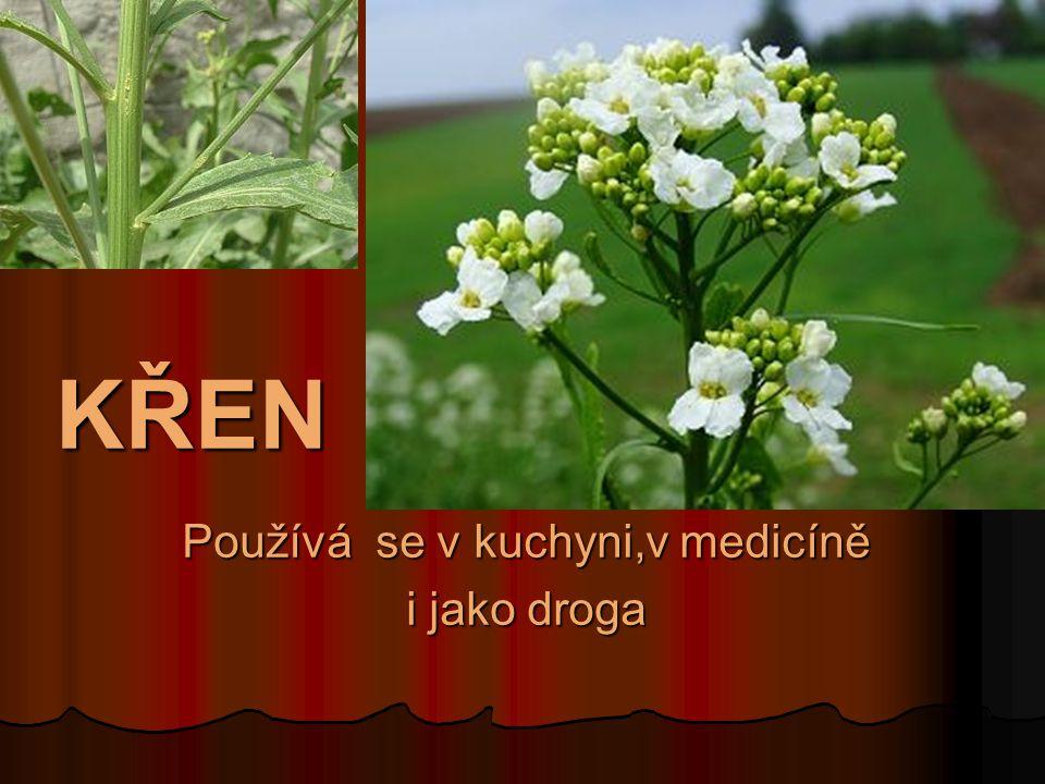 Používá se v kuchyni,v medicíně i jako droga
