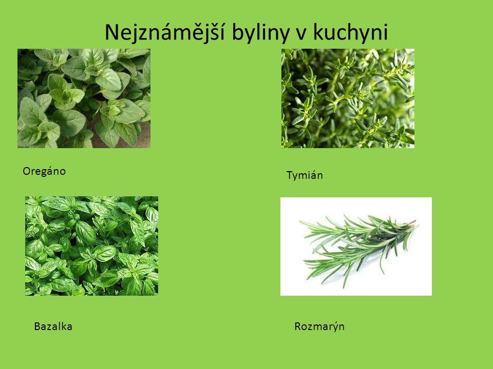 Nejznámější byliny v kuchyni