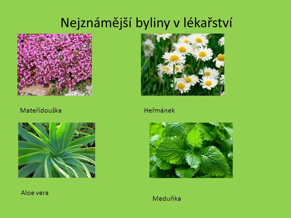 Nejznámější byliny v lékařství